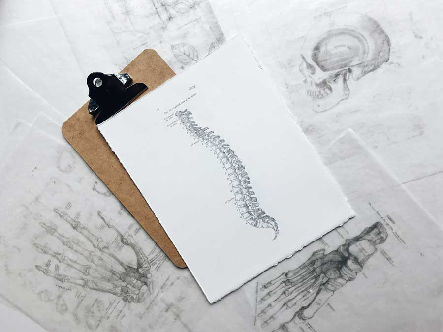 Drawing of spine